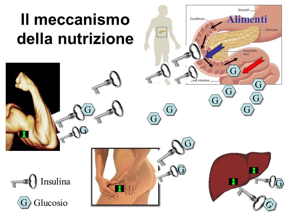Il meccanismo della nutrizione