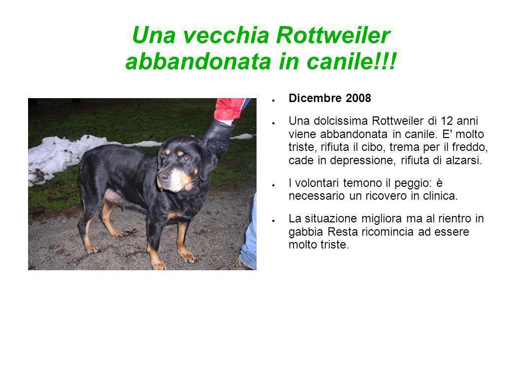 Una vecchia Rottweiler abbandonata in canile!!!