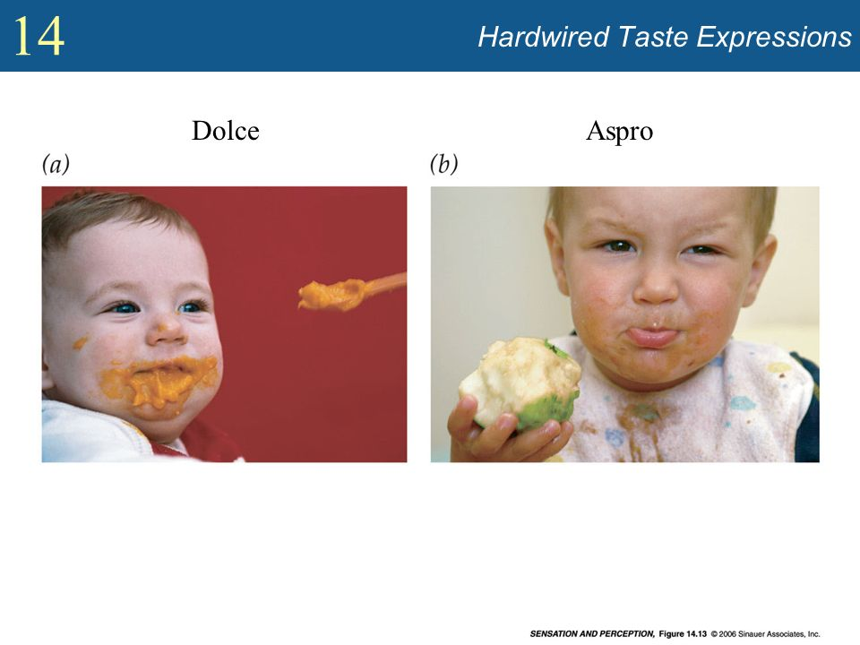 Hardwired Taste Expressions