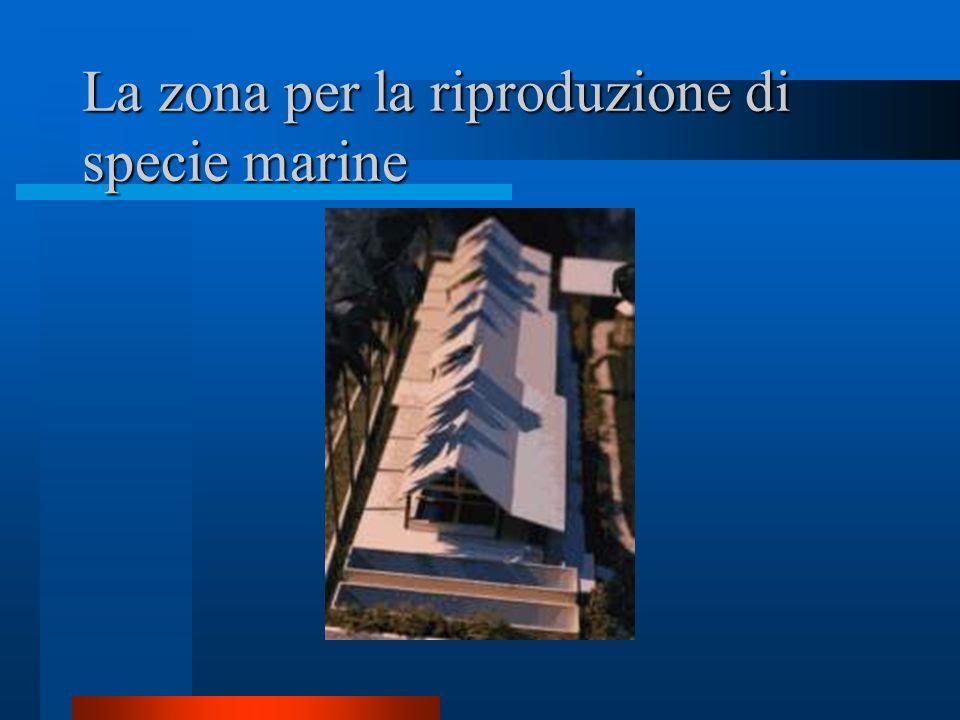 La zona per la riproduzione di specie marine