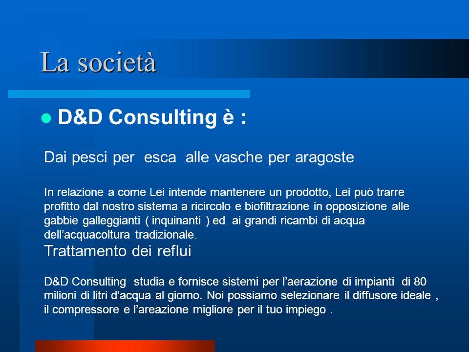 La società D&D Consulting è :