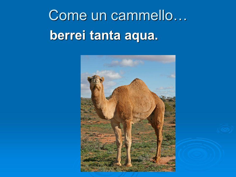 Come un cammello… berrei tanta aqua.