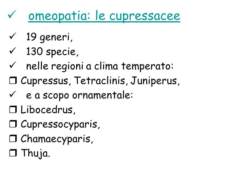 omeopatia: le cupressacee