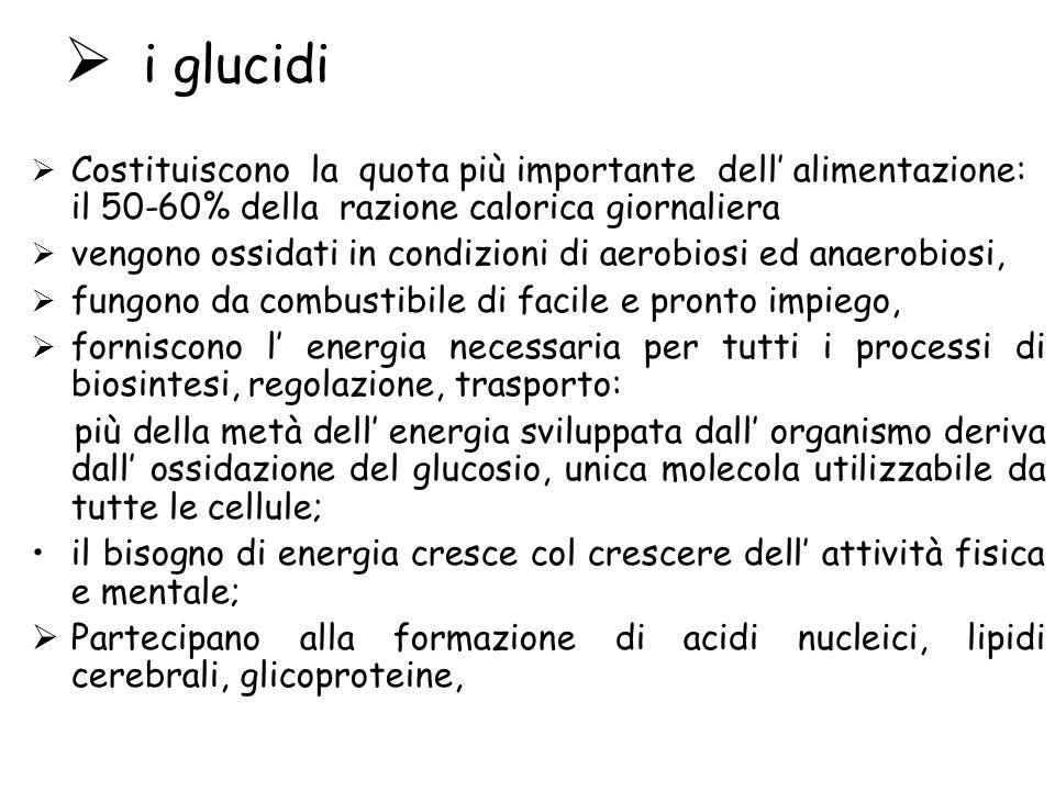 i glucidi Costituiscono la quota più importante dell' alimentazione: il 50-60% della razione calorica giornaliera.