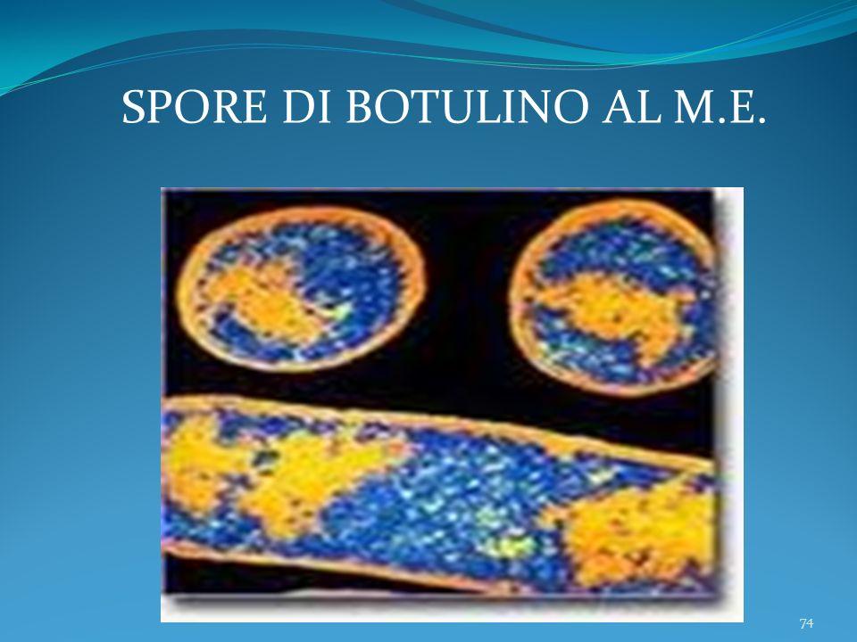 SPORE DI BOTULINO AL M.E.