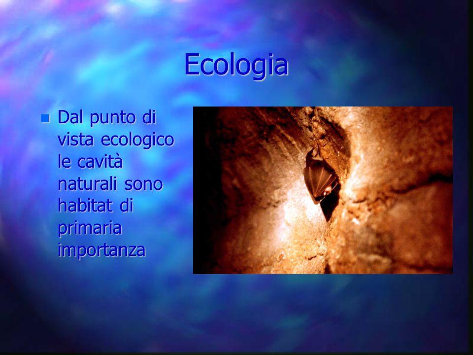 Ecologia Dal punto di vista ecologico le cavità naturali sono habitat di primaria importanza