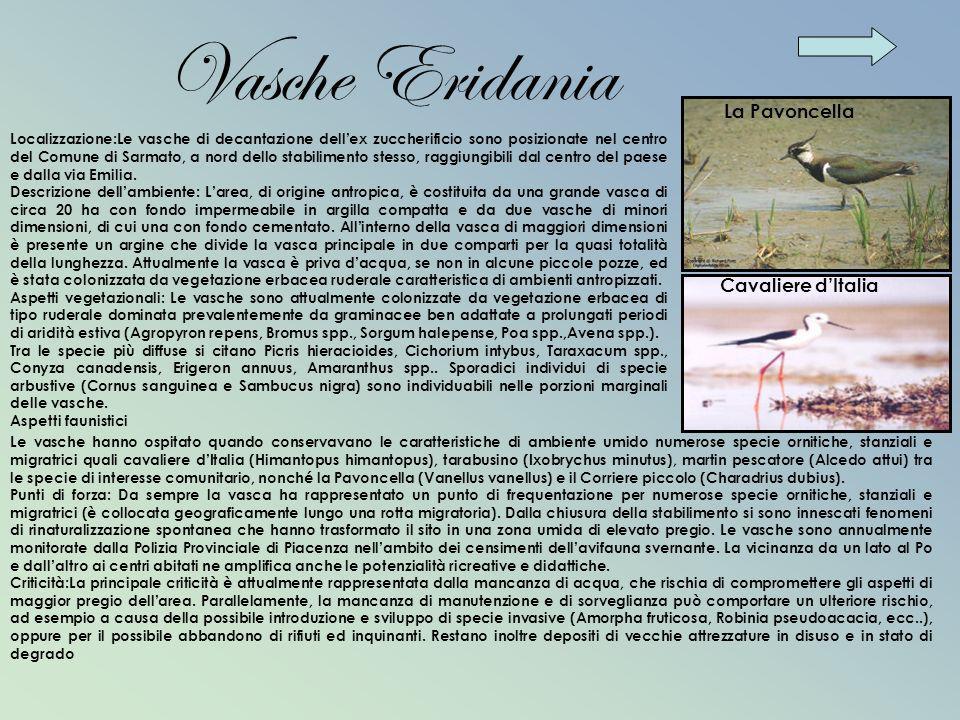 Vasche Eridania La Pavoncella Cavaliere d'Italia