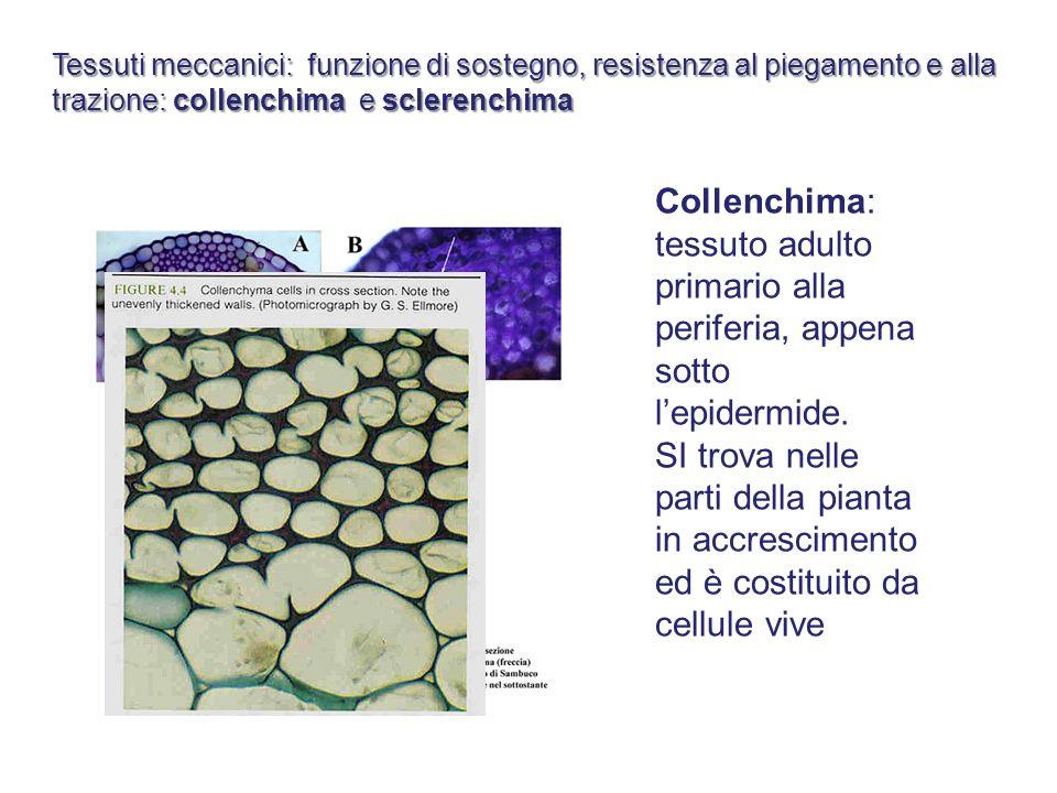 Tessuti meccanici: funzione di sostegno, resistenza al piegamento e alla