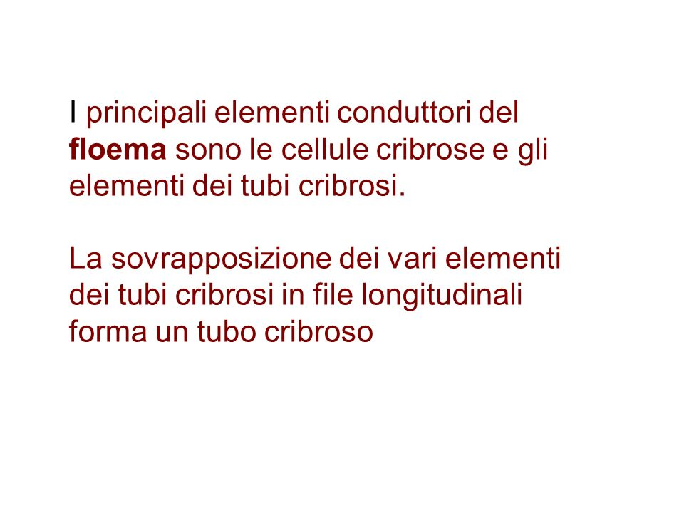 I principali elementi conduttori del floema sono le cellule cribrose e gli elementi dei tubi cribrosi.