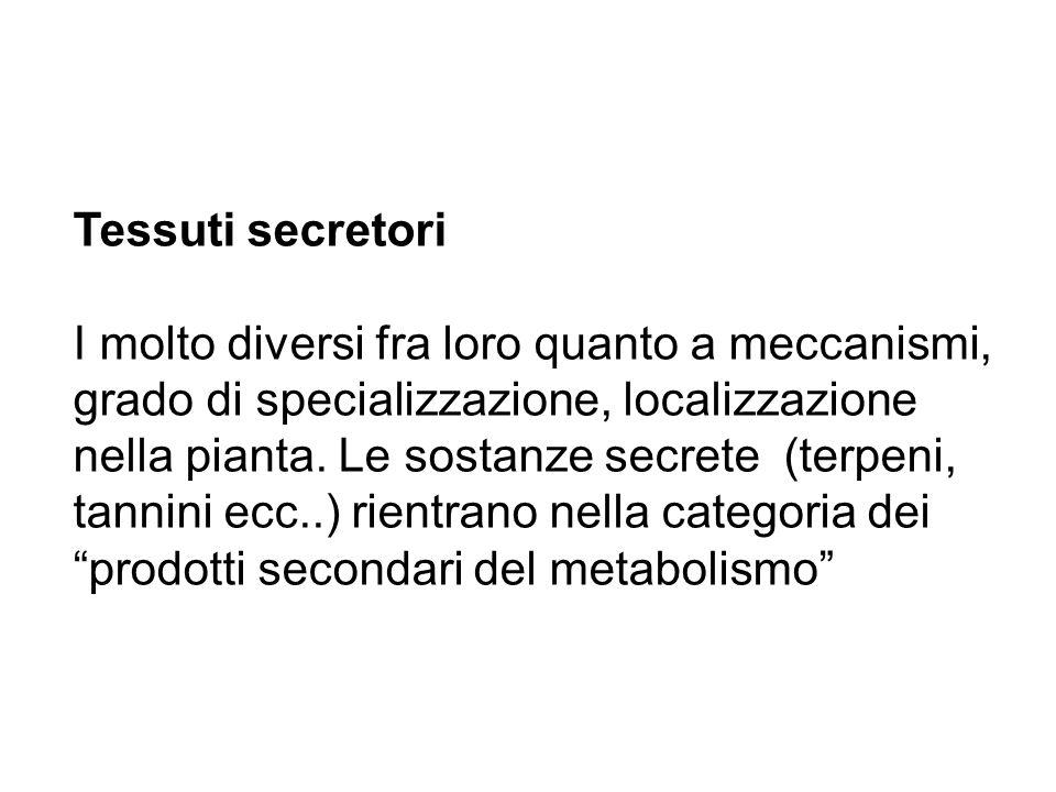 Tessuti secretori