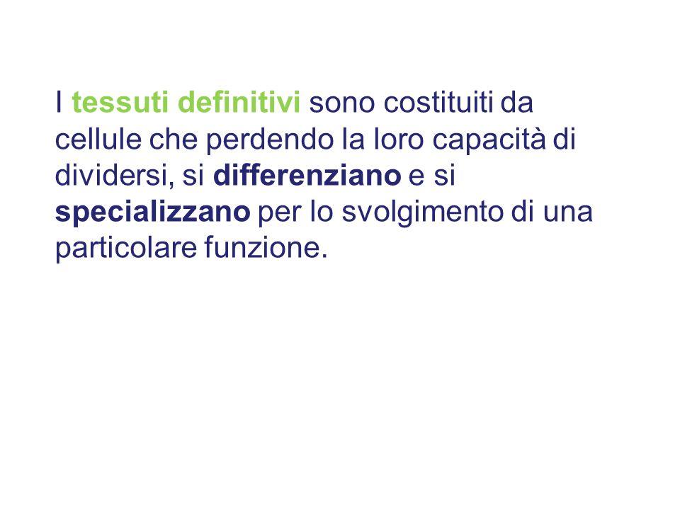 I tessuti definitivi sono costituiti da cellule che perdendo la loro capacità di dividersi, si differenziano e si specializzano per lo svolgimento di una particolare funzione.