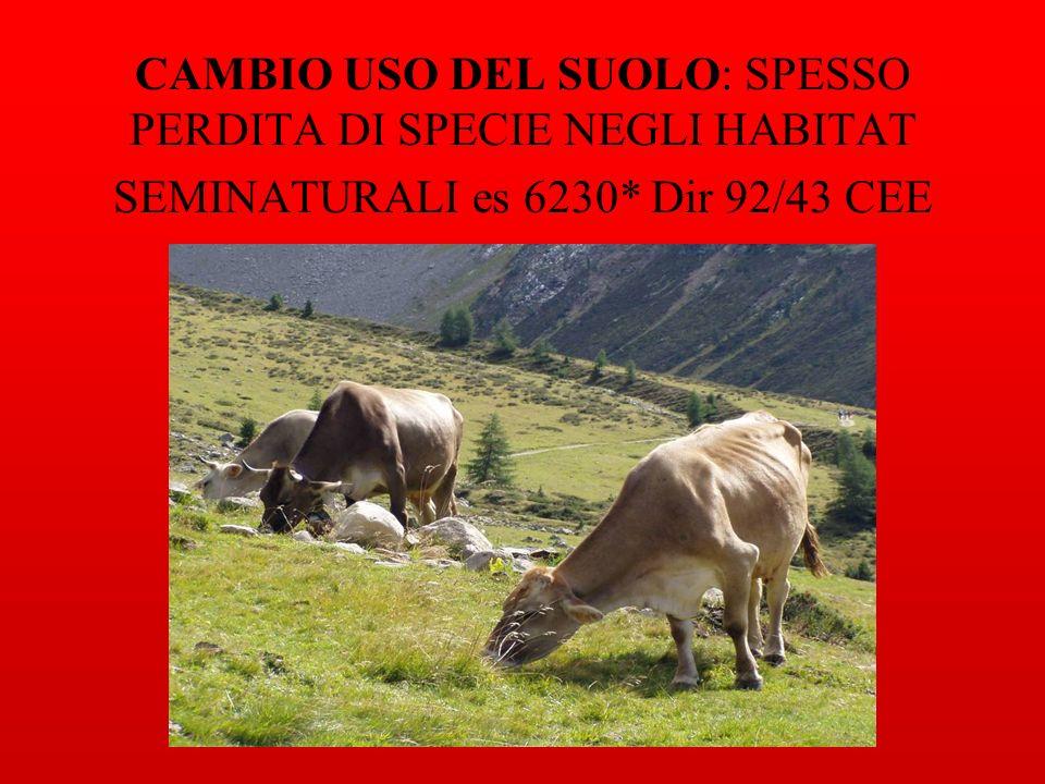 CAMBIO USO DEL SUOLO: SPESSO PERDITA DI SPECIE NEGLI HABITAT SEMINATURALI es 6230* Dir 92/43 CEE