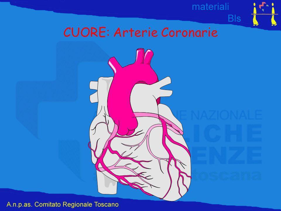 CUORE: Arterie Coronarie