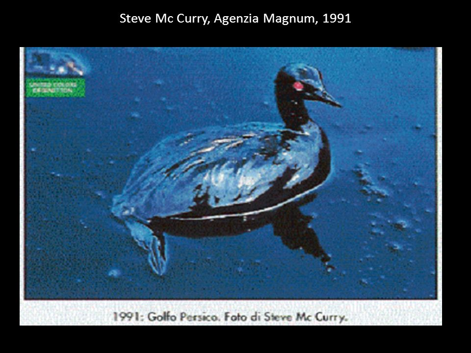 Steve Mc Curry, Agenzia Magnum, 1991