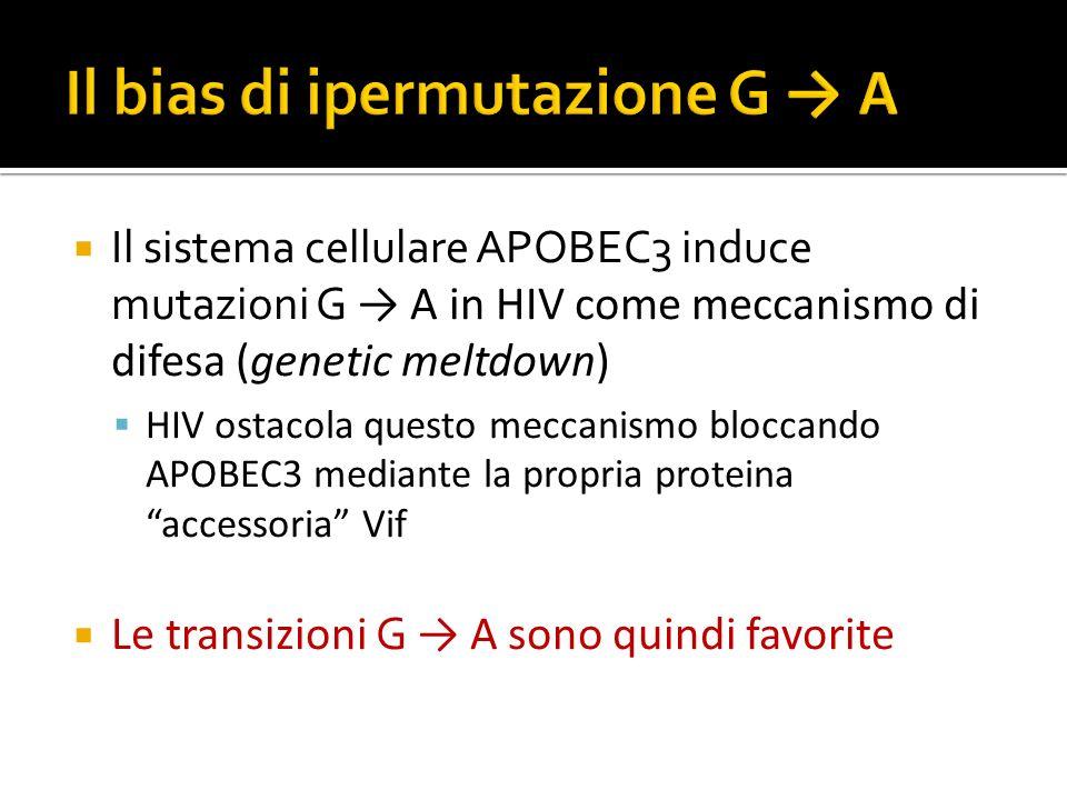 Il bias di ipermutazione G → A
