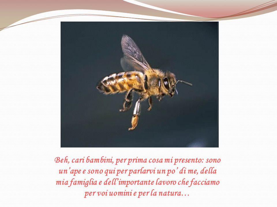Beh, cari bambini, per prima cosa mi presento: sono un'ape e sono qui per parlarvi un po' di me, della mia famiglia e dell'importante lavoro che facciamo per voi uomini e per la natura…