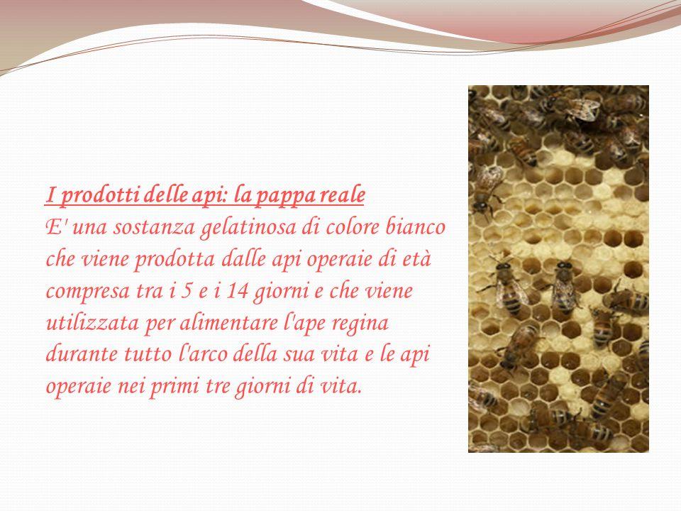I prodotti delle api: la pappa reale