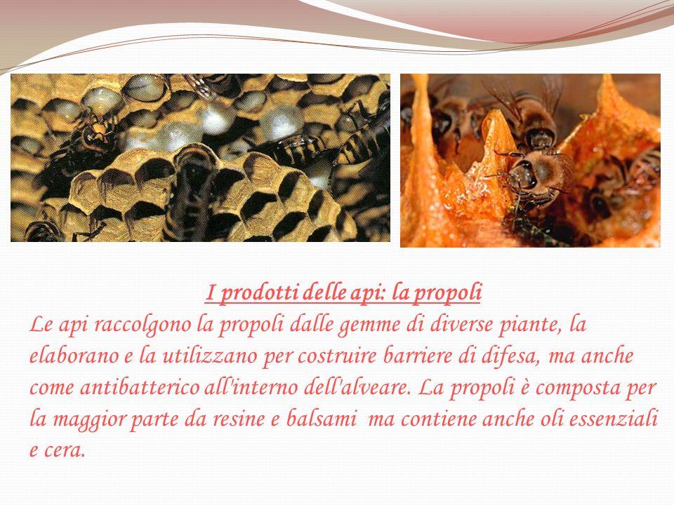 I prodotti delle api: la propoli
