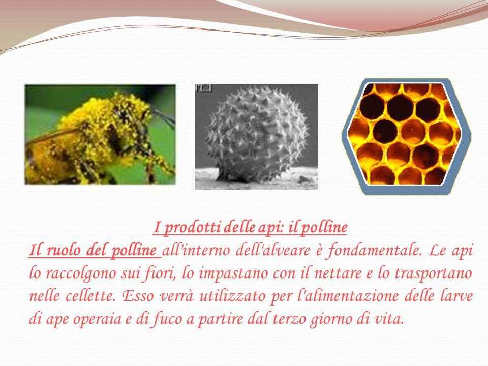 I prodotti delle api: il polline