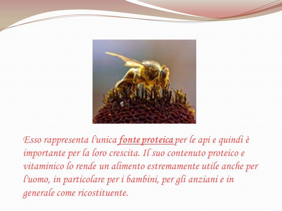 Esso rappresenta l unica fonte proteica per le api e quindi è importante per la loro crescita. Il suo contenuto proteico e vitaminico lo rende un alimento estremamente utile anche per l uomo, in particolare per i bambini, per gli anziani e in generale come ricostituente.