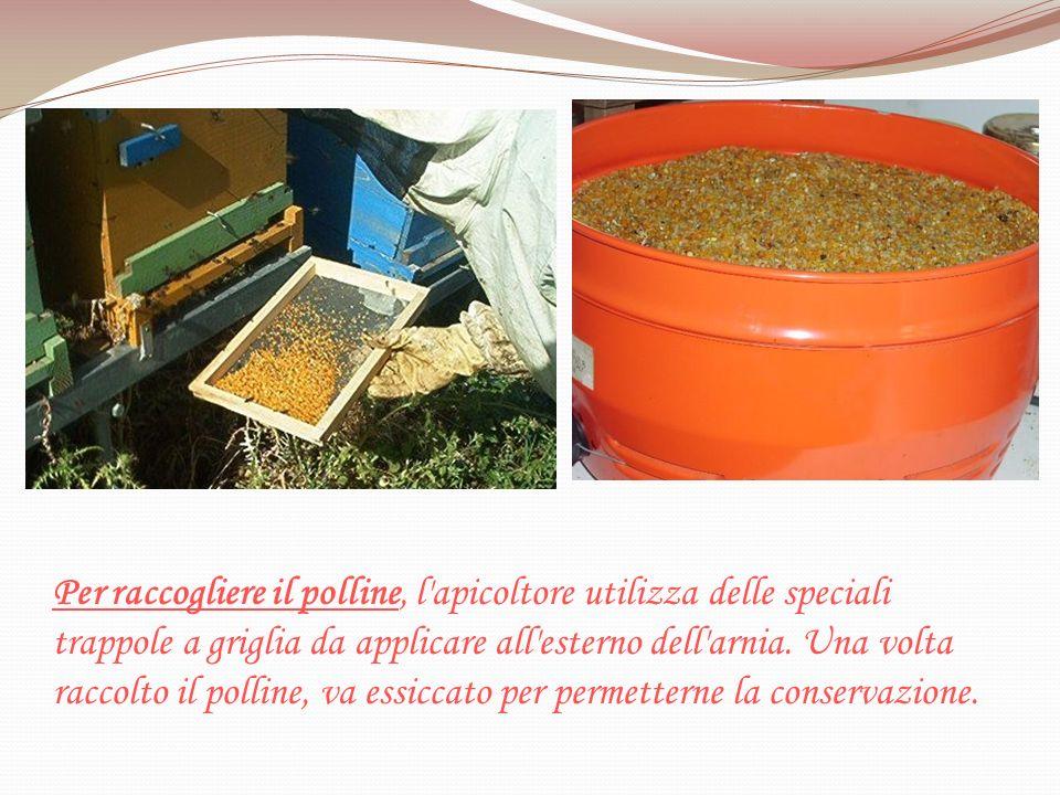 Per raccogliere il polline, l apicoltore utilizza delle speciali trappole a griglia da applicare all esterno dell arnia.