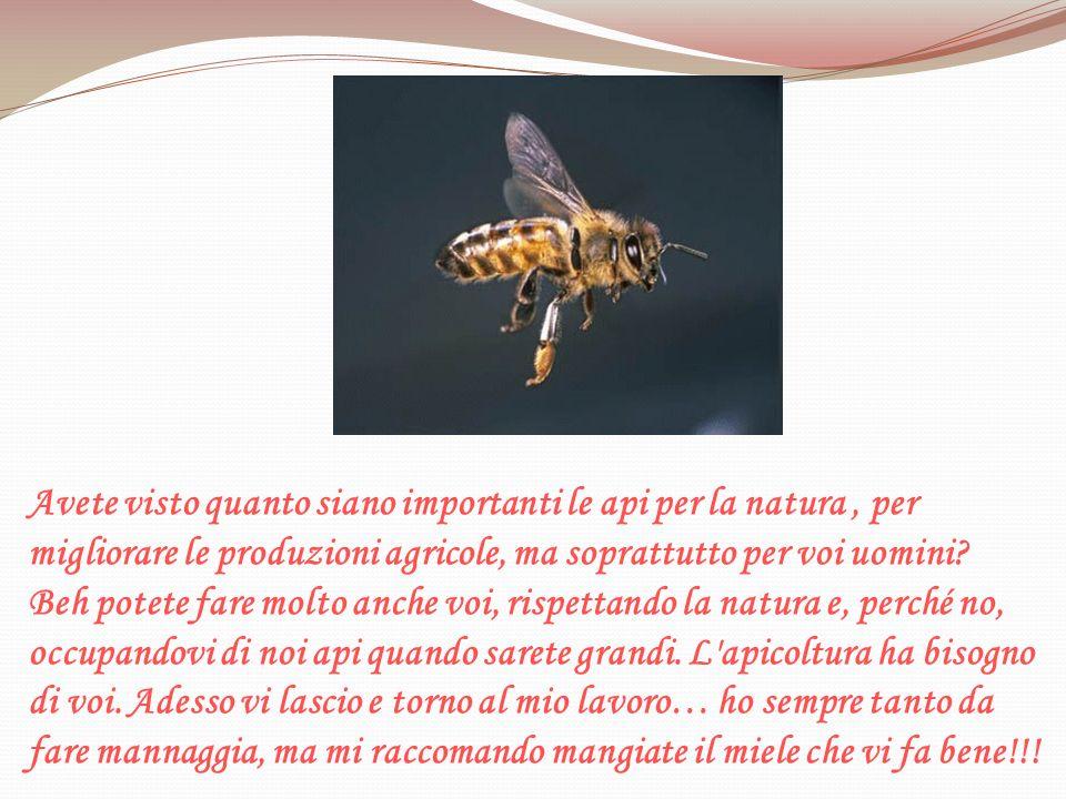 Avete visto quanto siano importanti le api per la natura , per migliorare le produzioni agricole, ma soprattutto per voi uomini.