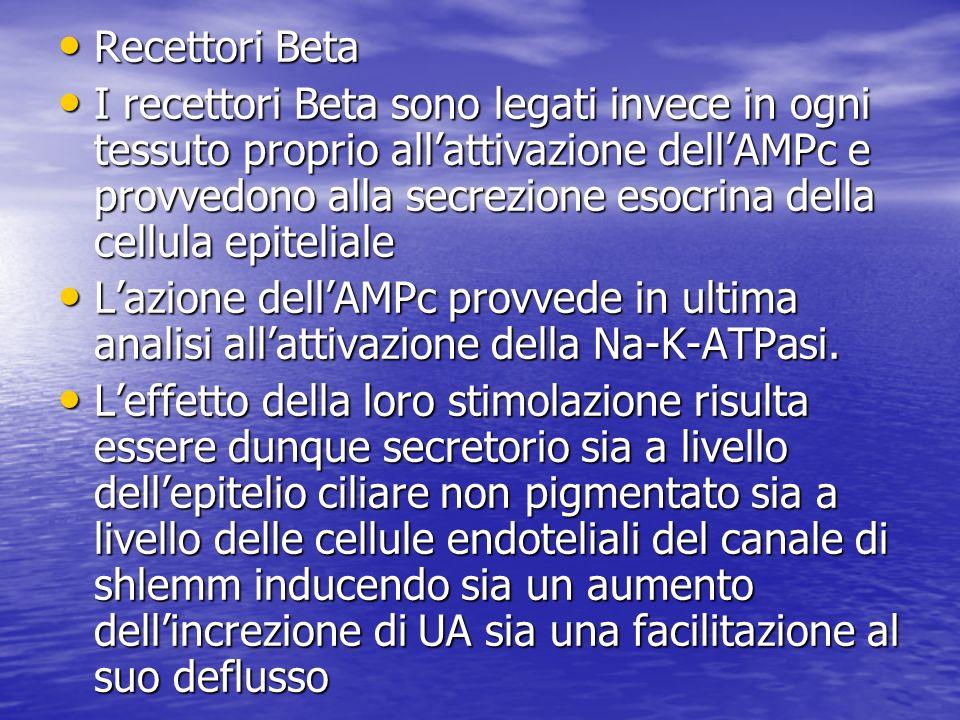 Recettori Beta