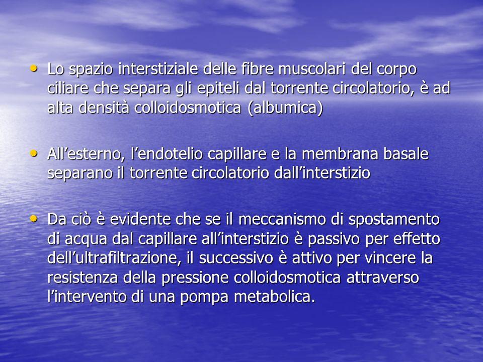 Lo spazio interstiziale delle fibre muscolari del corpo ciliare che separa gli epiteli dal torrente circolatorio, è ad alta densità colloidosmotica (albumica)