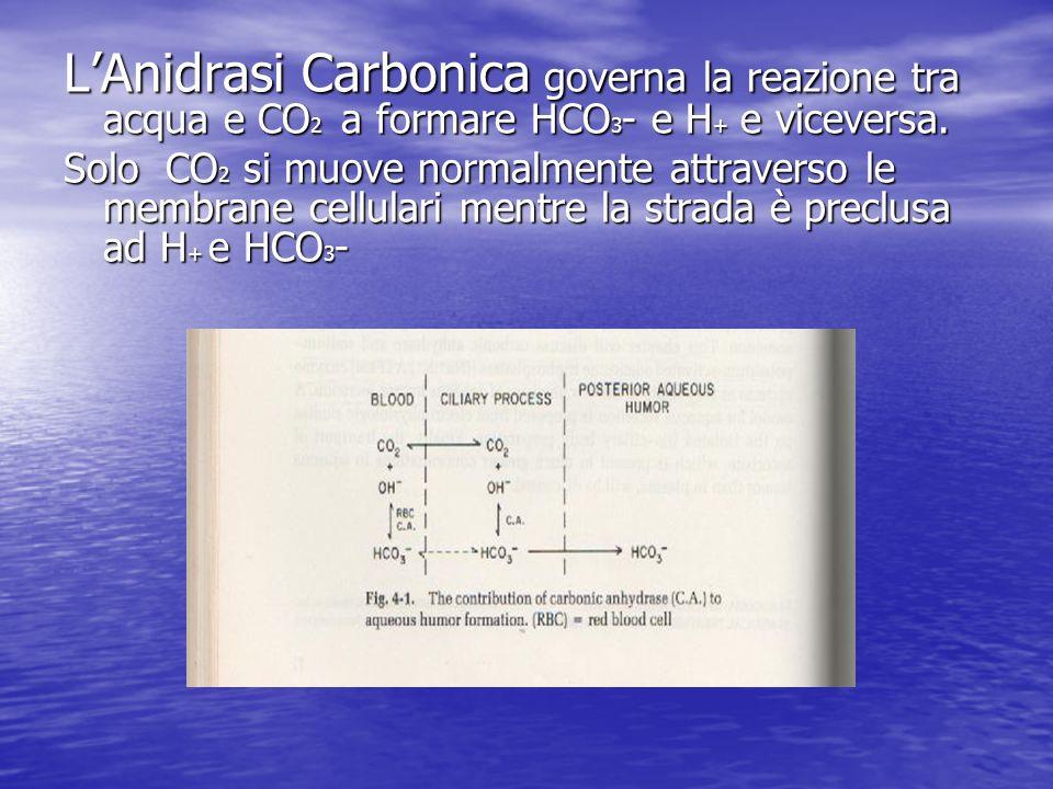 L'Anidrasi Carbonica governa la reazione tra acqua e CO2 a formare HCO3- e H+ e viceversa.