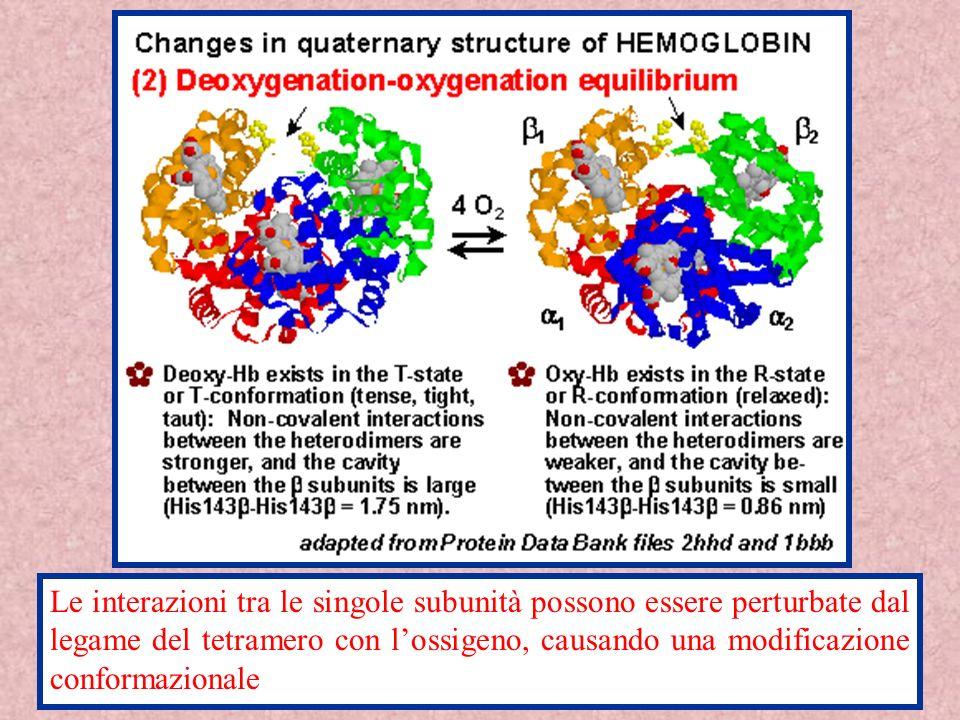 Le interazioni tra le singole subunità possono essere perturbate dal legame del tetramero con l'ossigeno, causando una modificazione conformazionale