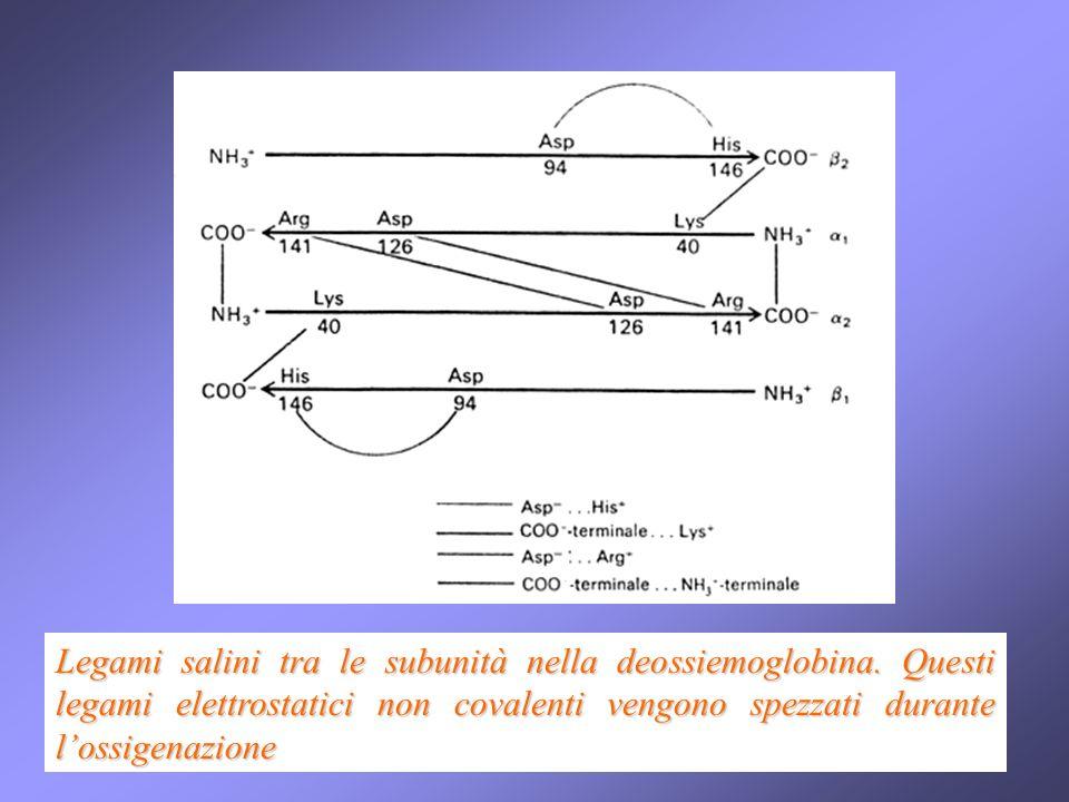 Legami salini tra le subunità nella deossiemoglobina
