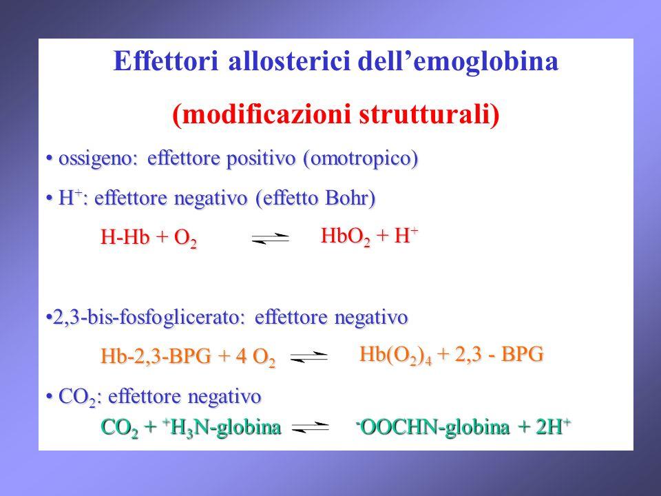 Effettori allosterici dell'emoglobina (modificazioni strutturali)
