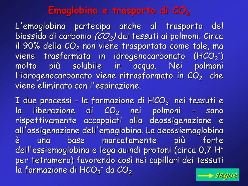 Emoglobina e trasporto di CO2