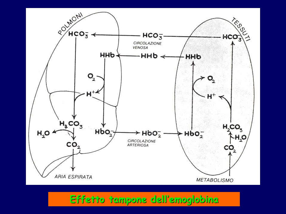 Effetto tampone dell'emoglobina
