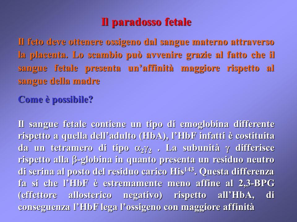 Il paradosso fetale