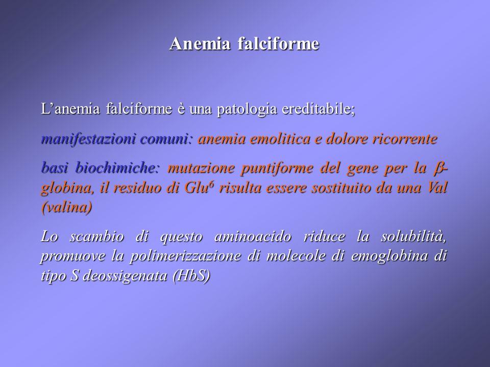 Anemia falciforme L'anemia falciforme è una patologia ereditabile;
