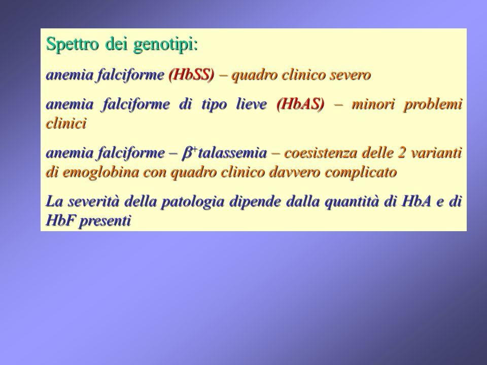 Spettro dei genotipi: anemia falciforme (HbSS) – quadro clinico severo