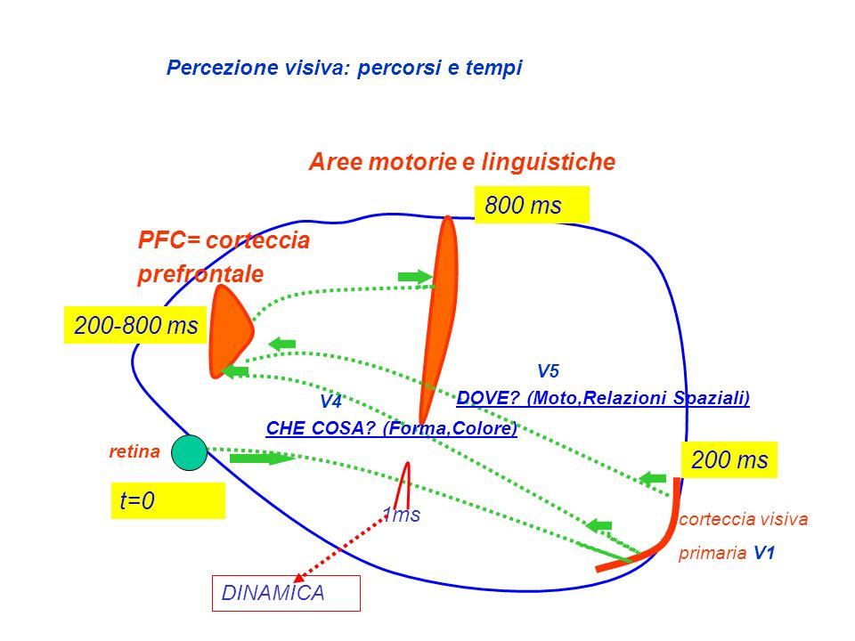 Aree motorie e linguistiche