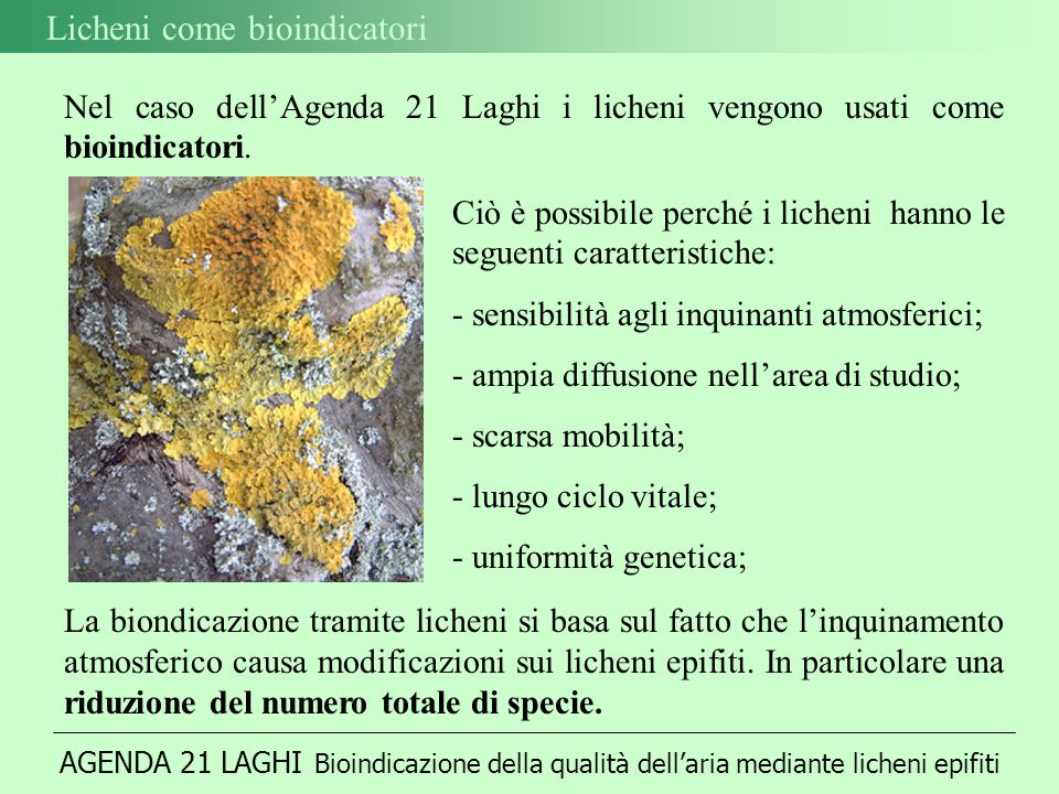 Licheni come bioindicatori