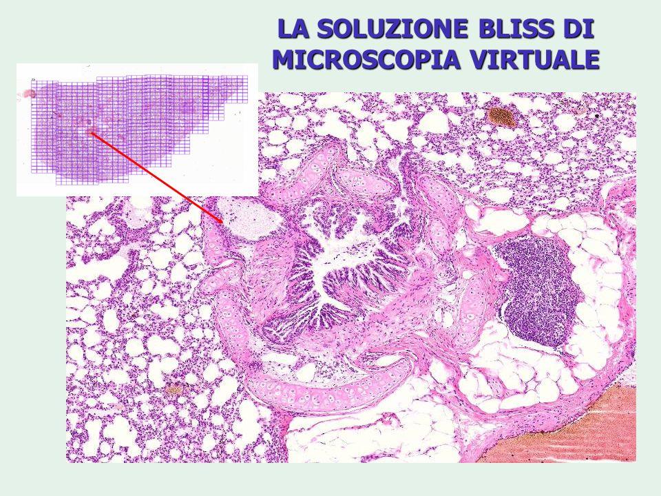 LA SOLUZIONE BLISS DI MICROSCOPIA VIRTUALE