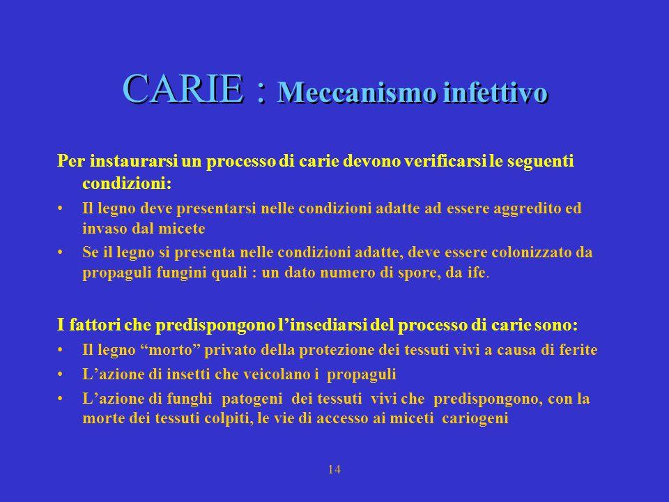 CARIE : Meccanismo infettivo