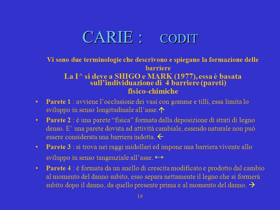 CARIE : CODIT Vi sono due terminologie che descrivono e spiegano la formazione delle barriere.