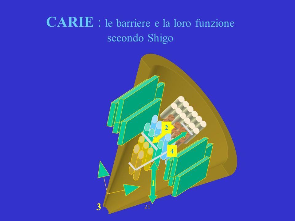 CARIE : le barriere e la loro funzione secondo Shigo