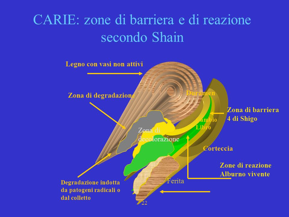 CARIE: zone di barriera e di reazione secondo Shain