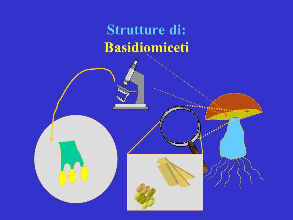Strutture di: Basidiomiceti