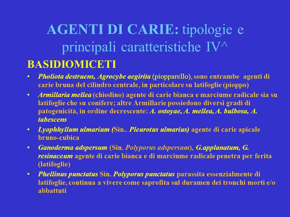 AGENTI DI CARIE: tipologie e principali caratteristiche IV^