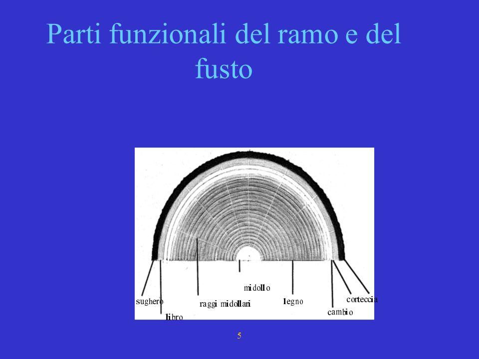 Parti funzionali del ramo e del fusto