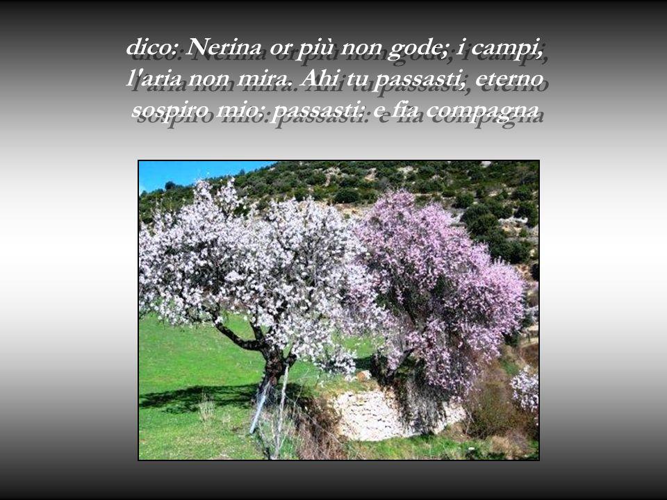 dico: Nerina or più non gode; i campi, l aria non mira