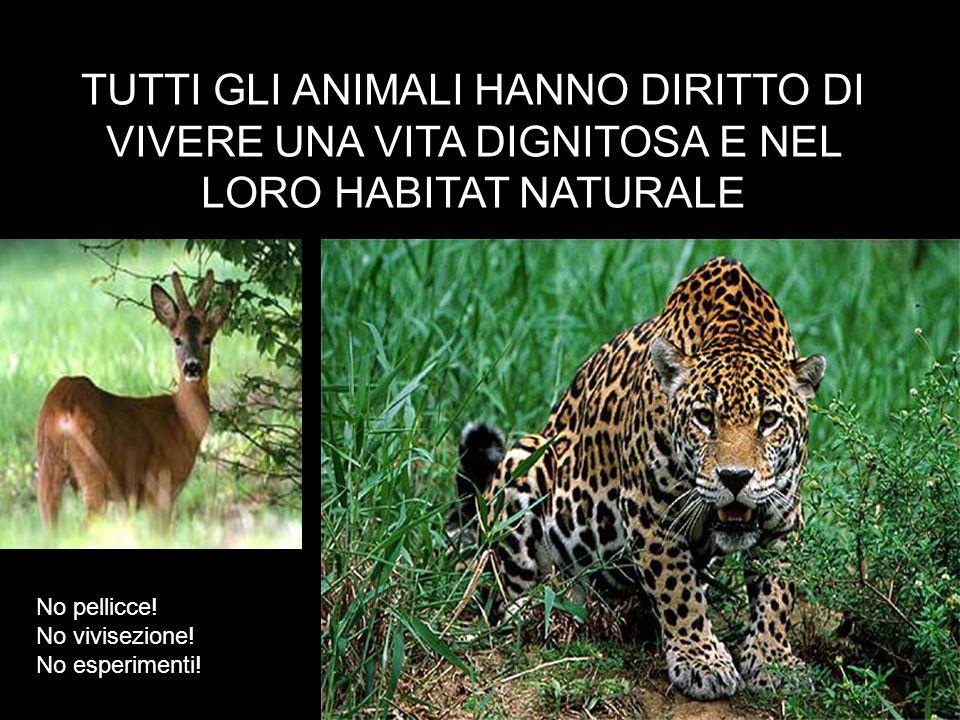 TUTTI GLI ANIMALI HANNO DIRITTO DI VIVERE UNA VITA DIGNITOSA E NEL LORO HABITAT NATURALE