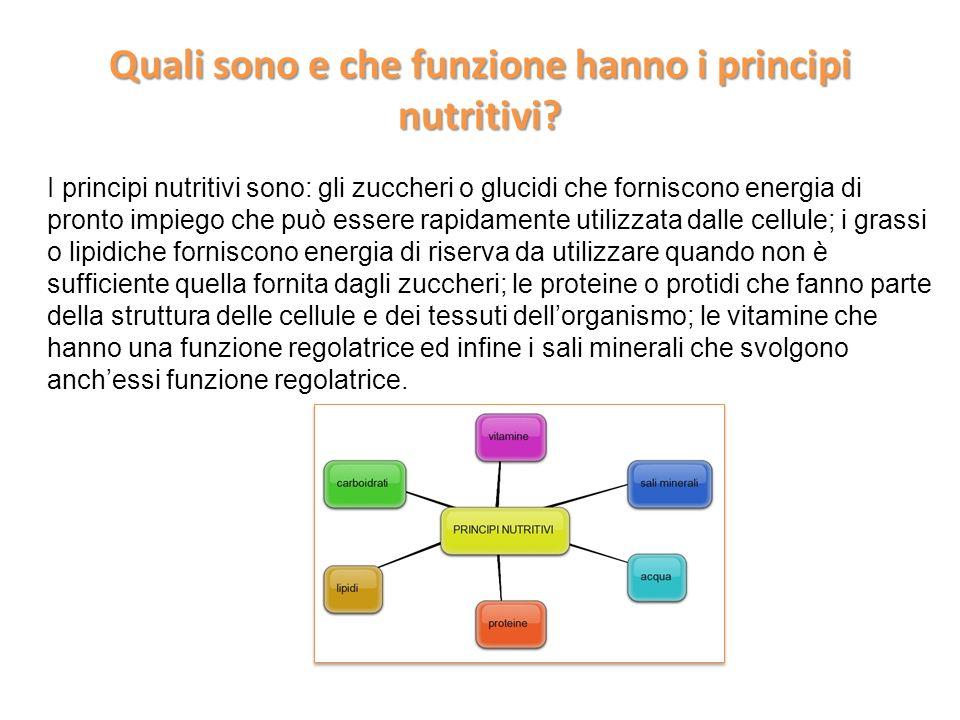 Quali sono e che funzione hanno i principi nutritivi
